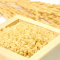 モリンガのGABAは発芽玄米の約30倍